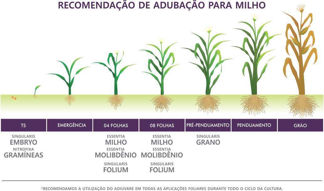 Recomendações de Uso para Milho